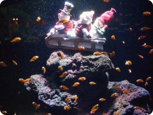 碧南水族館