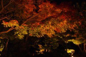 聚楽園公園の紅葉