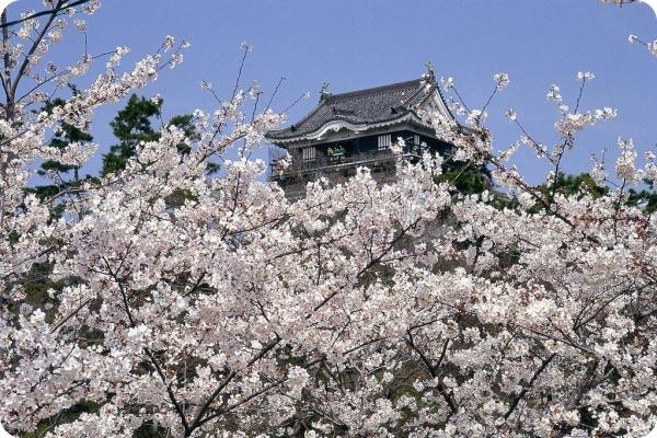 岡崎市桜まつり
