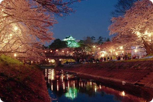 岡崎市桜まつりライトアップ
