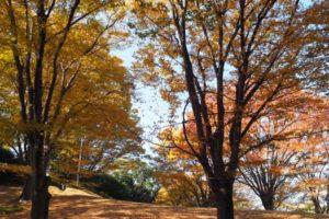 東海市・大池公園の紅葉