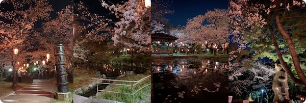 高浜市・大山緑地の桜ライトアップ