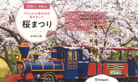 碧南市・明石公園桜まつり