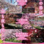 大府桜まつり