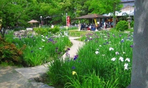 知立公園 花しょうぶまつり
